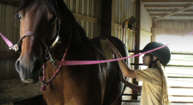 Online Therapeutic Riding Course - Strides to Success Strides to Success